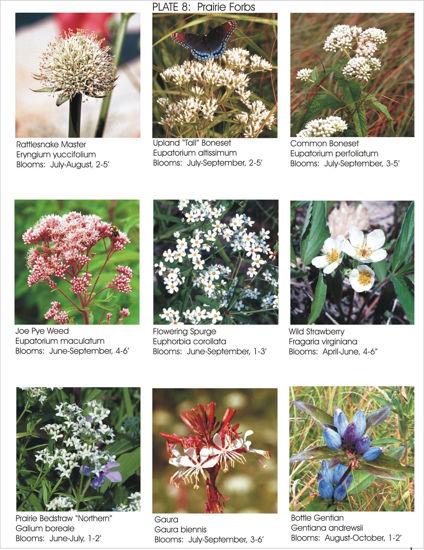 Photos of Wildflowers